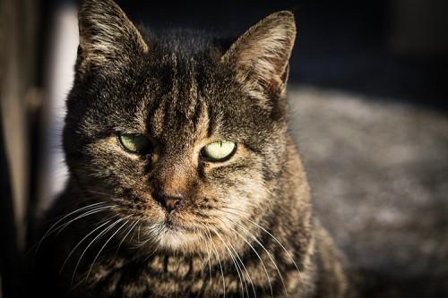 ブラック猫