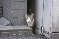akashi / PIXTA(ピクスタ)ねこ猫