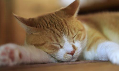 住んでいるアパートから退去要求…ペット同居で部屋が傷だらけでも「立退料」請求は可能?